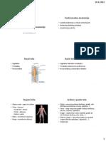 Funkcionalna anatomija.pdf