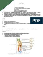 Médula espinal silau