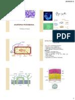 Anatomia Microbiana 04