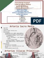 Arteria Iliaca Mercedes Robles