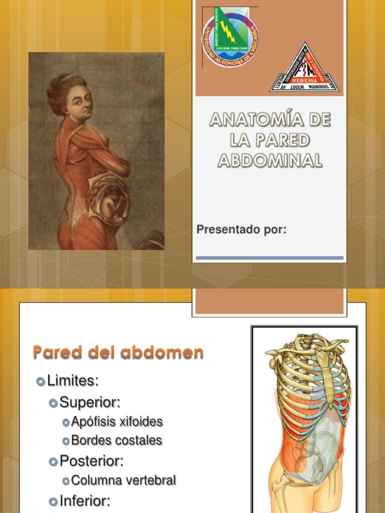 Anatomia de La Pared Abdominal