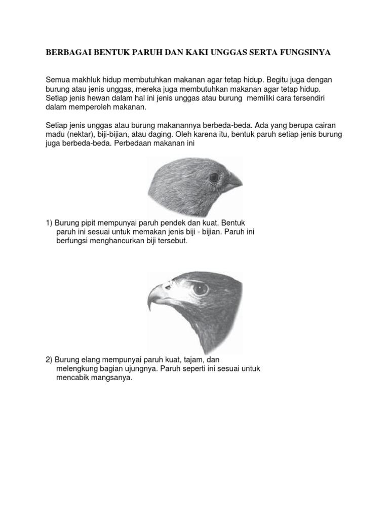 Unduh 760+  Gambar Burung Elang Yang Mudah Ditiru  Paling Keren Free