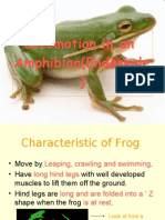 Locomotion in an Amphibian