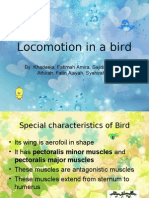 Locomotion in a Bird