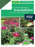 Sfaturi Pentru Plantarea Si Intretinerea Trandafirilor File 26