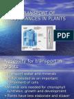 Transport of Substances in Plants