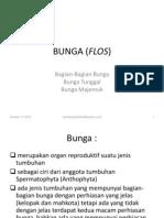 Uad Bunga (Flos)