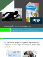 PPT 2 - Regulação nervosa e hormonal nos animais (Transmissão do Impulso Nervoso)