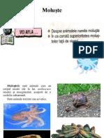 Biologie- Moluste.ppt