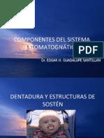 COMPONENTES DEL SISTEMA ESTOMATOGNÁTICO