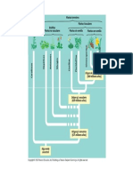 Briofitas y Pteridofitas 2013