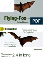 Flying Foxes - The largest bats in the world