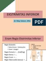EKSTRIMITAS INFERIOR.pdf