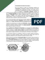 C1B1 IMPLICACIONES DEL DESCUBRIMIENTO DEL MUNDO MICROSCOPICO.docx