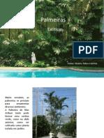 Palmeiras_exoticas - Cópia