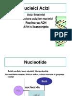 aciyi nucleici