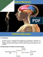 sistemanervoso-120618081852-phpapp01