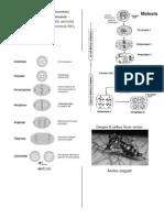 print wall 1.docx