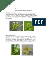 Bunga Pepaya.docx