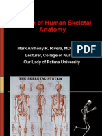 Lecture 7 - Musculoskeletal