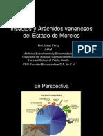 Insectos y Arácnidos venenosos del Estado de Morelos