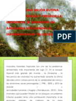 Teledeccion d Eincendios Foresstales en La Amazonia