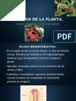 Tejidos de La Planta