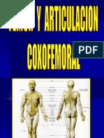 Femur y Articulacion Coxofemoral i