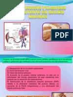 Hipertensión pulmonar persistente en recién nacidos exp.