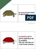 Tortue (Reptile)