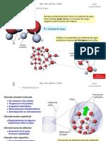 TEMAS 2, 3, 4 - Agua, sales minerales, glucidos y lipidos.ppt