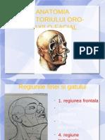 ANATOMIE ORO-MAXILO-FACIALĂ