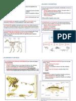UNIDAD 3 LOS MAMÍFEROS.pdf