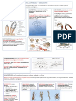LOS INVERTEBRADOS UD. 4 4º.pdf