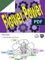 FlowerBasics.ppt