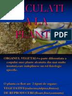circulatia-la-plante.ppt