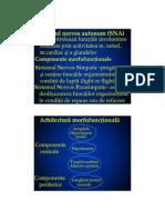 Curs 4 - Sistemul nervos vegetativ - 2013.pdf