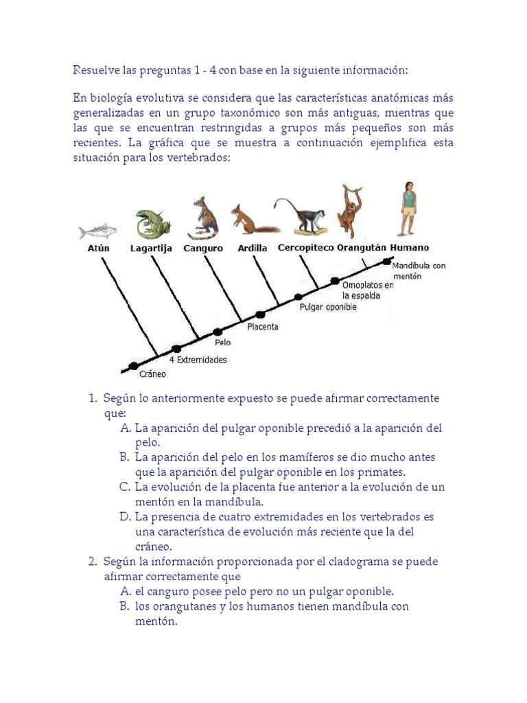 Ejercicios de Cladogramas