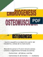 Embrio Osteomuscular, Sentidos, Piel