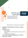 Entero Entero Anastomosis