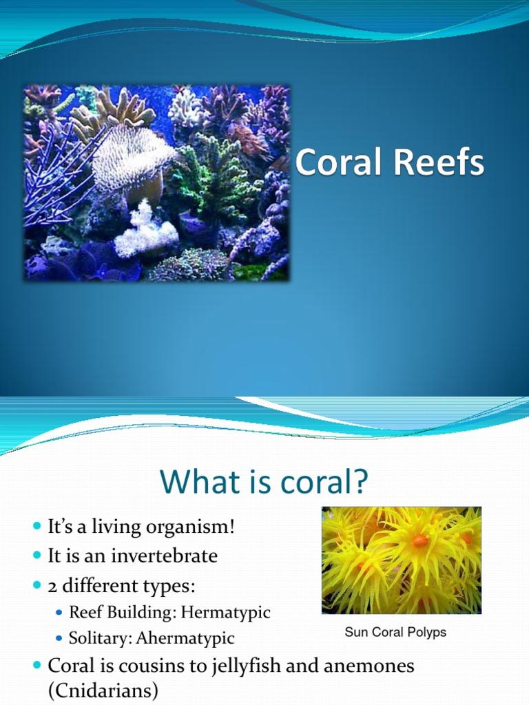 CoralReefslauren.ppt | Coral | Coral Reef
