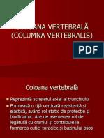 coloana verteb