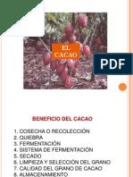 EL CACAO.pdf