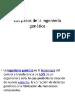 Los pasos de la ingeniería genética
