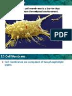 ch3sec2 cell membrane