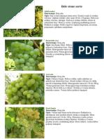 Bele i crvene stone sorte grozdja.doc