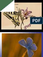 Las Mariposas Benito Manuel Rodriguez Freites