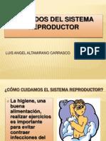 Cuidados Del Sistema Reproductor