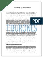 REPRODUCCIÓN EN LOS TIBURONES 3