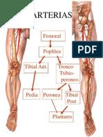 E_ANGIOLOGIA, Arterias Miembro Inferior, Uson.mx[1]